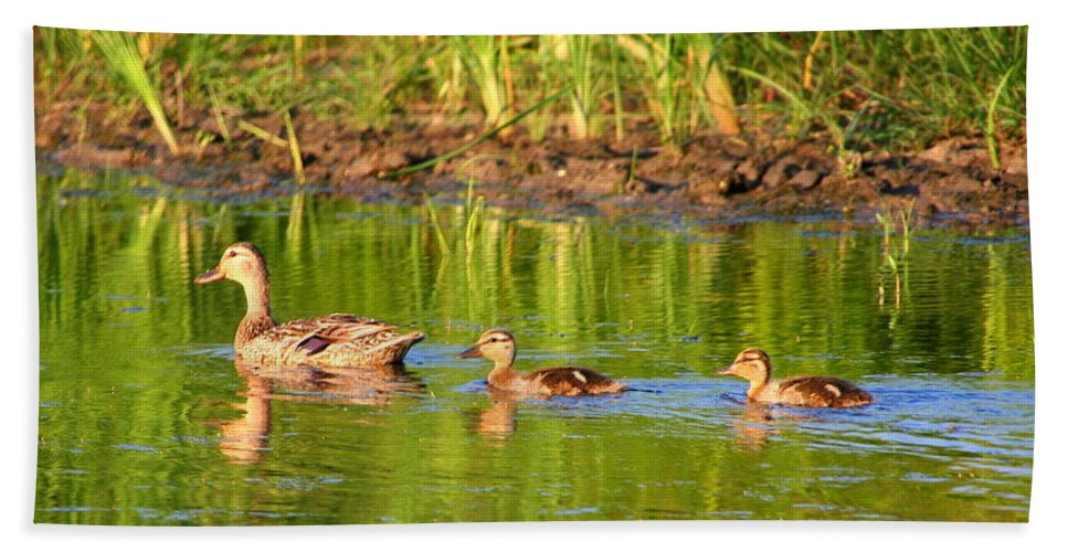 Mallard Bath Sheet featuring the photograph Here We Come by Laurel Talabere
