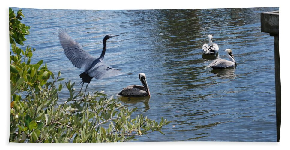 Taking Flight Hand Towel featuring the photograph Heron And Pelicans by Robert Floyd