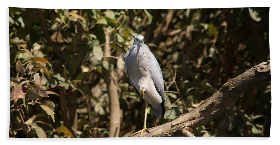 Australia Hand Towel featuring the digital art Heron At Katherine Gorge by Carol Ailles