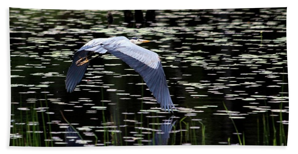 Heron Hand Towel featuring the photograph Heron Take Off by Kenny Glotfelty