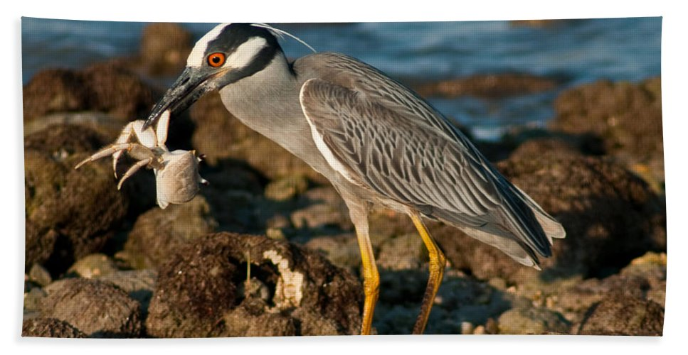 Heron With Crab Bath Sheet featuring the photograph Heron With Crab by Stephen Whalen