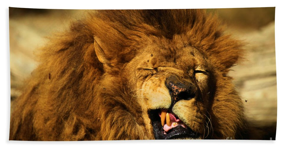 Lion Bath Sheet featuring the photograph Hey Baby by Adam Jewell