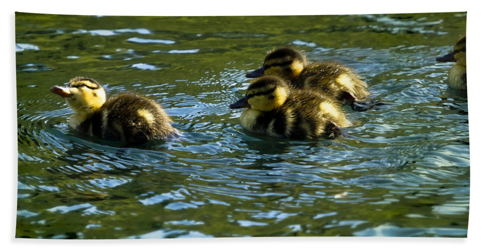 Duckling Hand Towel featuring the photograph Hey Guys - What's That by Belinda Greb