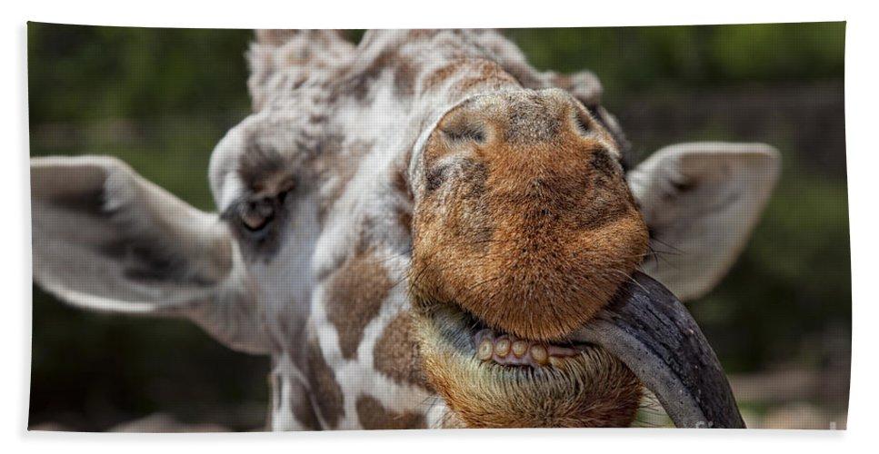 Giraffe Bath Sheet featuring the photograph Hi There by Timothy Hacker