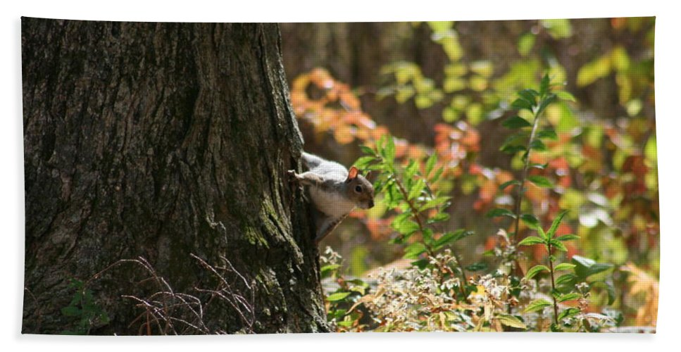 Squirrel Squirrels Bath Sheet featuring the photograph Hide And Seek by Neal Eslinger