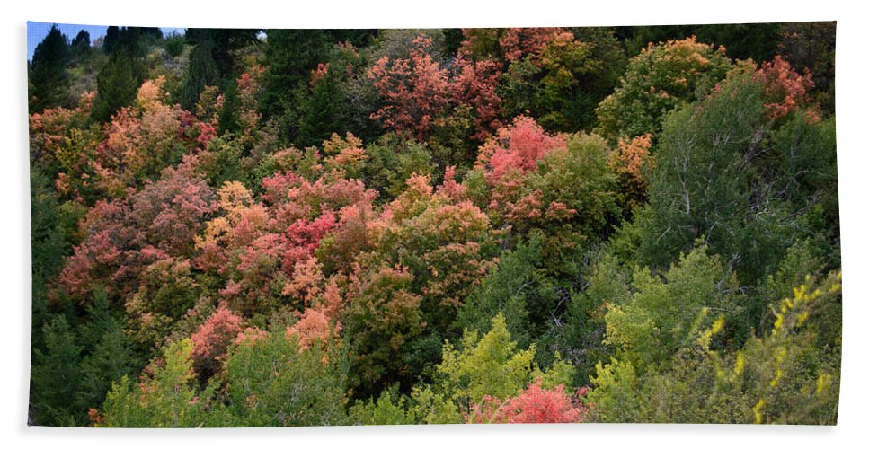 Landscape Bath Sheet featuring the photograph Hill Side Colors by Colleen McIntier