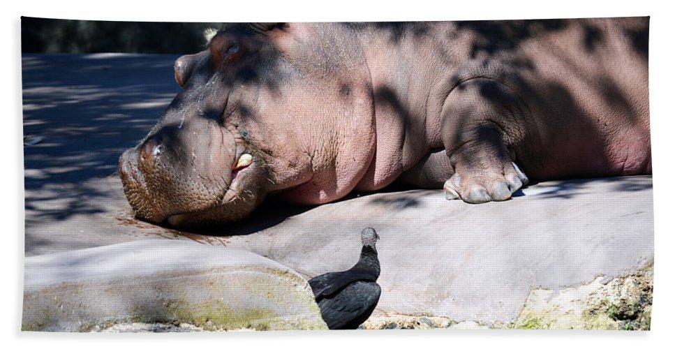 Hippo Bath Sheet featuring the photograph Hippo And Friend by Linda Kerkau