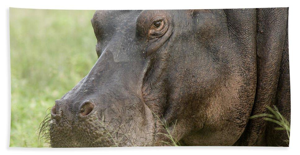 Mp Hand Towel featuring the photograph Hippopotamus Okavango Delta Botswana by Matthias Breiter