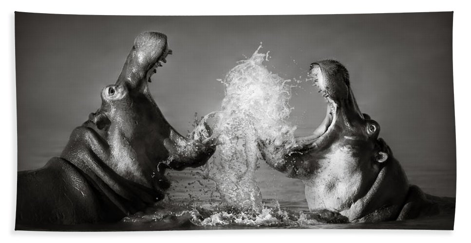 Hippo Bath Towel featuring the photograph Hippo's Fighting by Johan Swanepoel