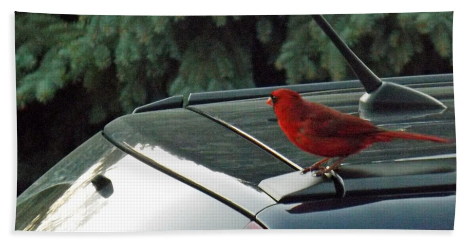 Bird Bath Sheet featuring the photograph Hitching A Ride by Brenda Brown