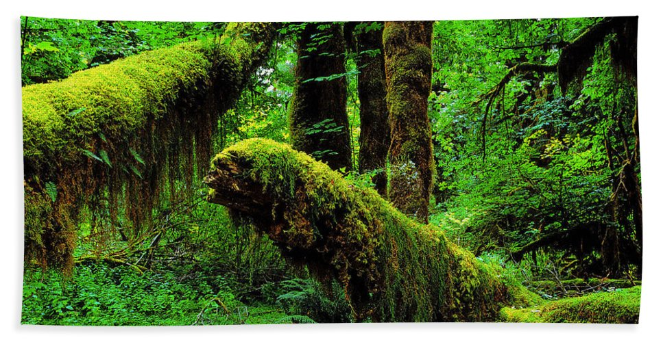 Hoh Rainforest Hand Towel featuring the photograph Hoh Rainforest by Ingrid Smith-Johnsen