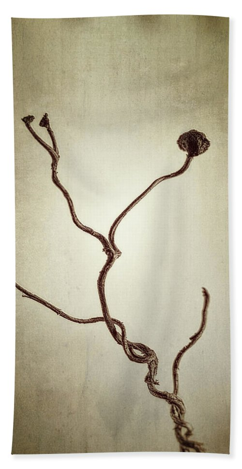 Vine Bath Towel featuring the photograph Holdfast Rootlet by Scott Norris