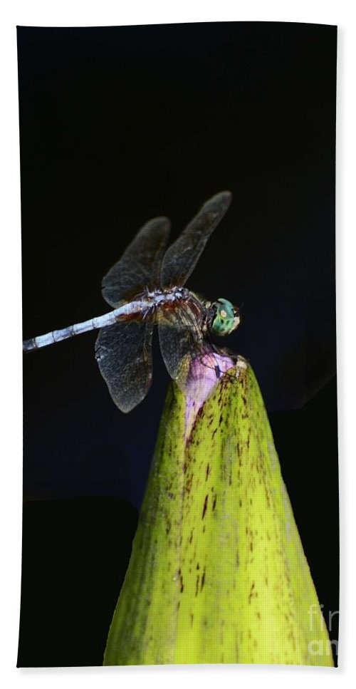 Insects Bath Sheet featuring the photograph Holding On by Cindy Manero