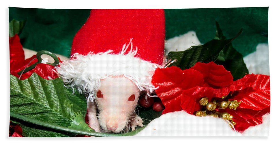 Hairless Bath Sheet featuring the photograph Holiday Cheer by Art Dingo
