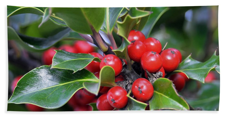 Holly Berries Bath Sheet featuring the photograph Holly Berries 2 by Sharon Talson