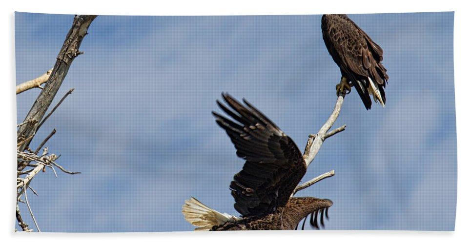 Bald Eagle Photograph Bath Sheet featuring the photograph Home Defense by Jim Garrison