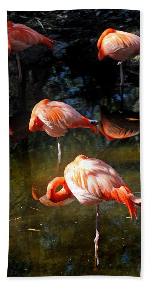 Homosassa Springs State Park Bath Sheet featuring the photograph Homosassa Springs Flamingos 5 by Jeff Brunton