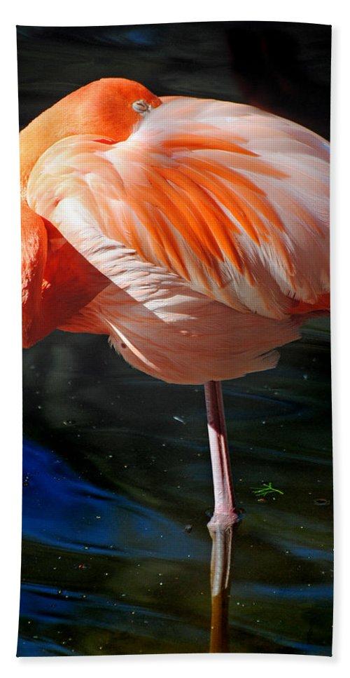 Homosassa Springs State Park Bath Sheet featuring the photograph Homosassa Springs Flamingos 7 by Jeff Brunton