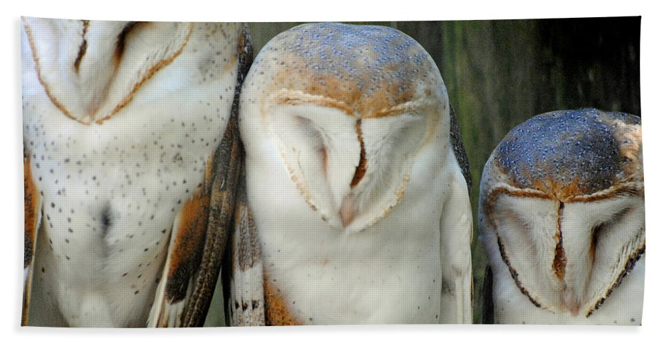 Homosassa Springs State Park Bath Sheet featuring the photograph Homosassa Springs Snowy Owls 1 by Jeff Brunton