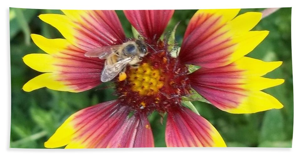 Honey Bee Bath Sheet featuring the photograph Honey Bee On A Indian Blanket by Don Hand