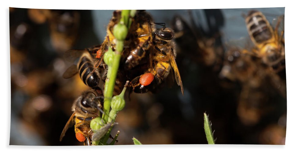 Worker Bee Bath Towel featuring the photograph Honey Bees Carrying Pollen by Chico Sanchez