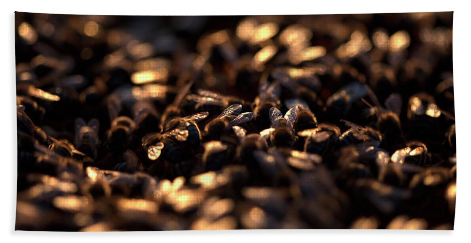 Worker Bees Bath Towel featuring the photograph Honey Bees Work Illuminated At Sunset by Chico Sanchez