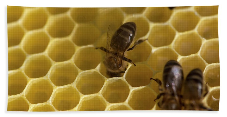 Worker Bee Bath Towel featuring the photograph Honey Bees Work In A Beehive Of An by Chico Sanchez