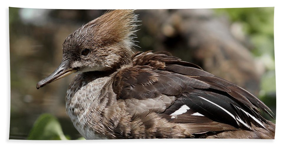 Female Hooded Merganser Hand Towel featuring the photograph Hooded Merganser Female by Ernie Echols