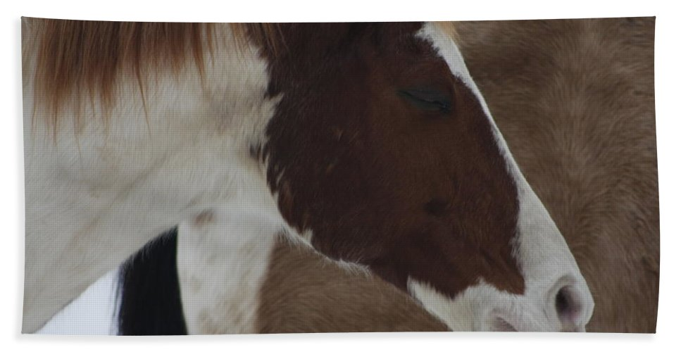 Snow Hand Towel featuring the photograph Horse 15 by David Yocum