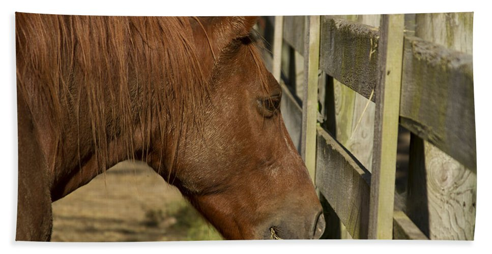 Brown Horse Hand Towel featuring the photograph Horse 31 by David Yocum