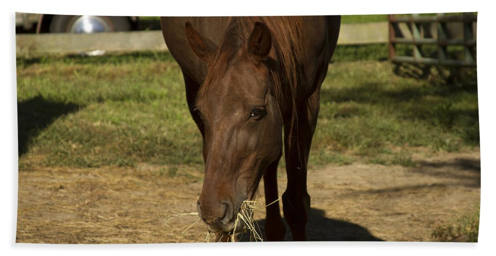 Brown Horse Bath Sheet featuring the photograph Horse 32 by David Yocum