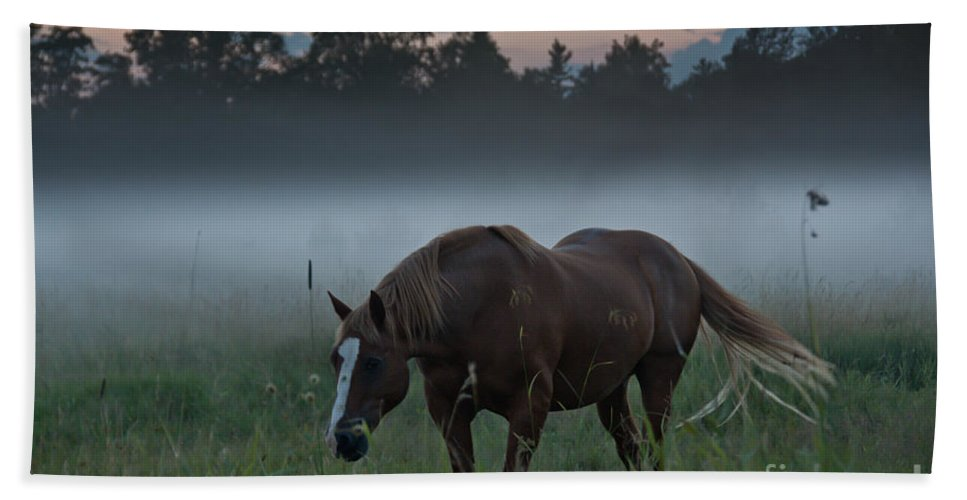 Landscape Hand Towel featuring the photograph Horse And Fog by Cheryl Baxter