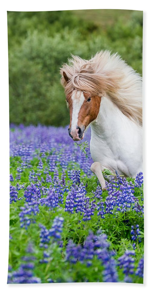 Photography Bath Sheet featuring the photograph Horse Running By Lupines. Purebred by Panoramic Images