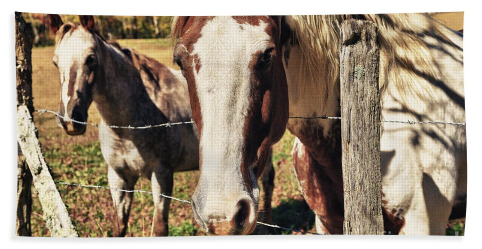 Animals Hand Towel featuring the photograph Horses by Jill Lang