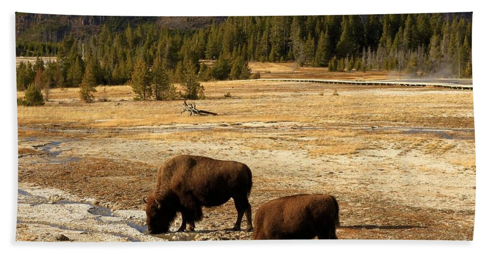 Bison Hand Towel featuring the photograph Hot Drinks by Adam Jewell