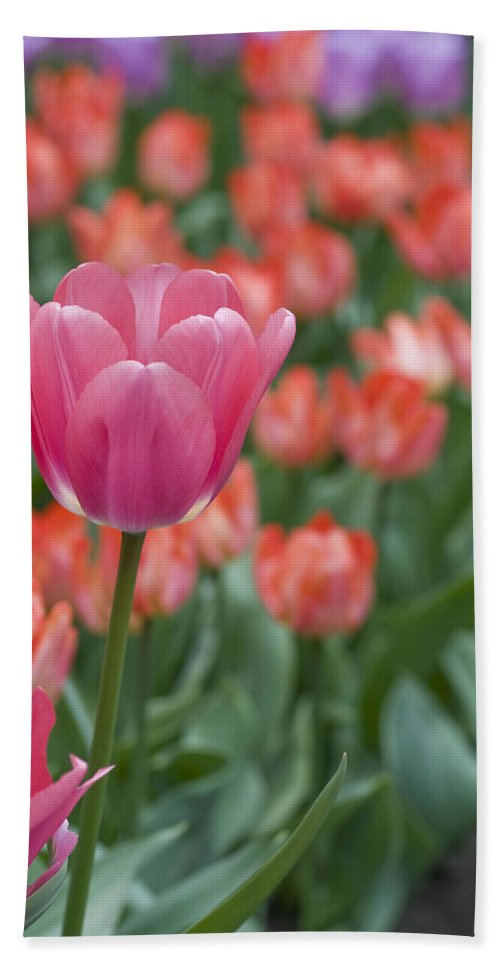 Bloom Hand Towel featuring the photograph Hot Pink by Juli Scalzi