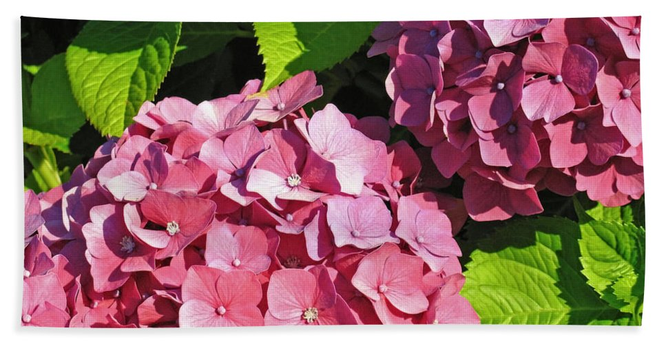Hydrangea Bath Sheet featuring the photograph Hot Pink Hydrangea by Ann Horn