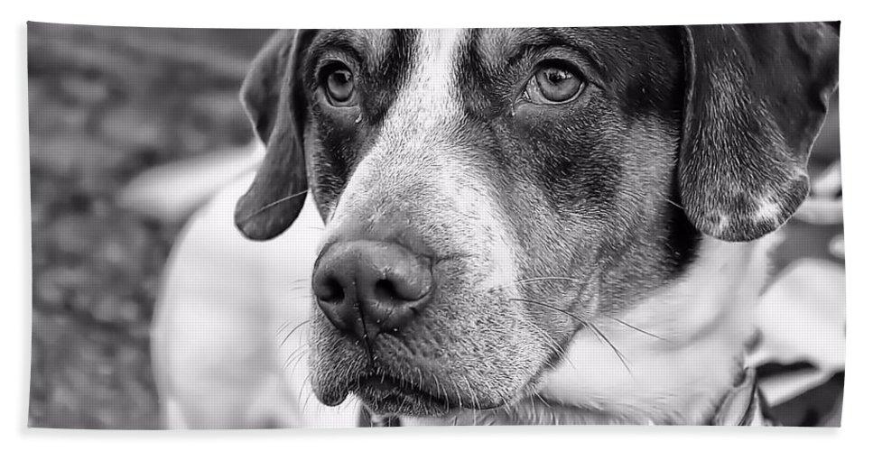 Dog Bath Sheet featuring the photograph Hound by Joyce Baldassarre
