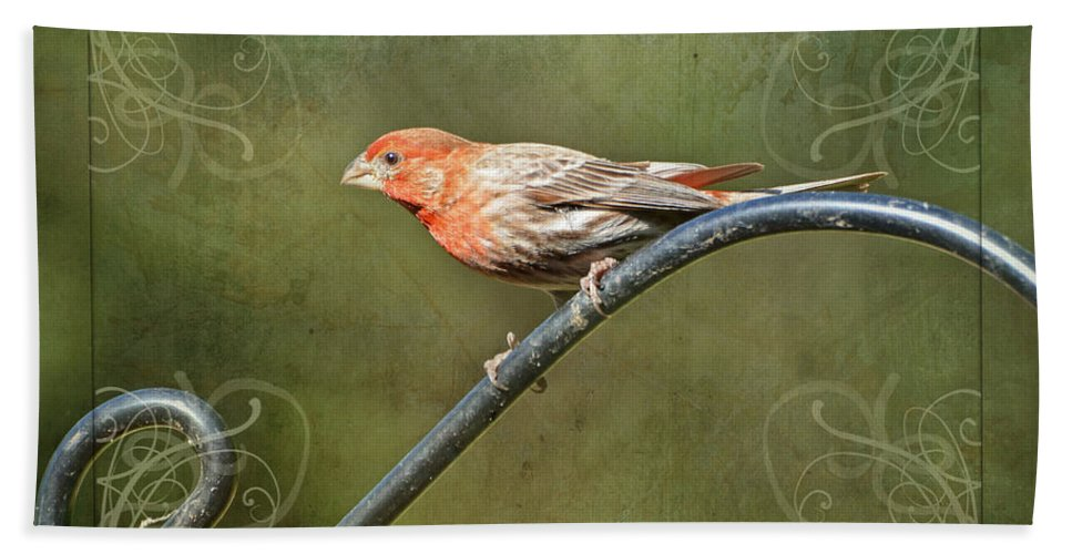 Nature Bath Sheet featuring the photograph House Finch On Guard II by Debbie Portwood