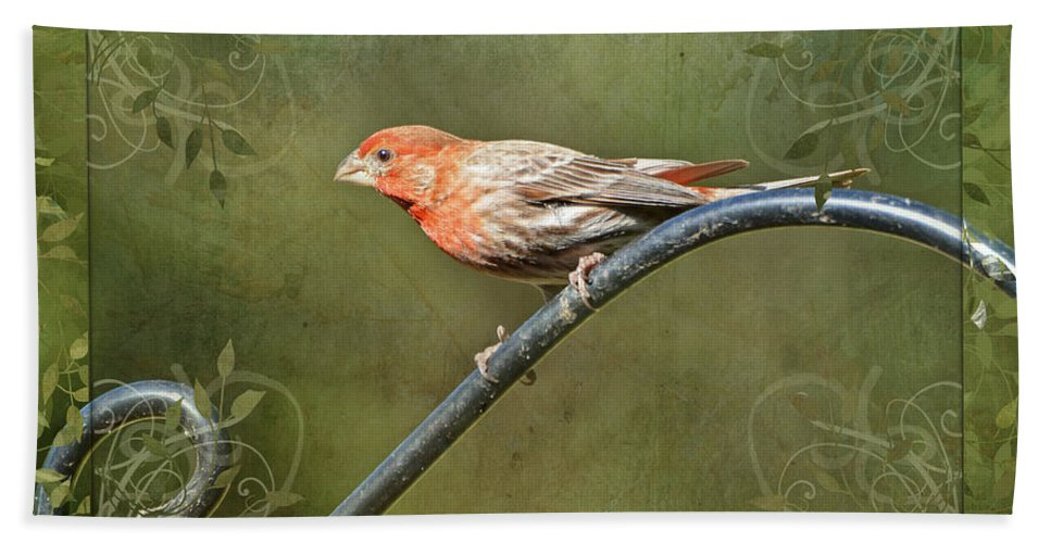 Nature Bath Sheet featuring the photograph House Finch On Guard IIi by Debbie Portwood