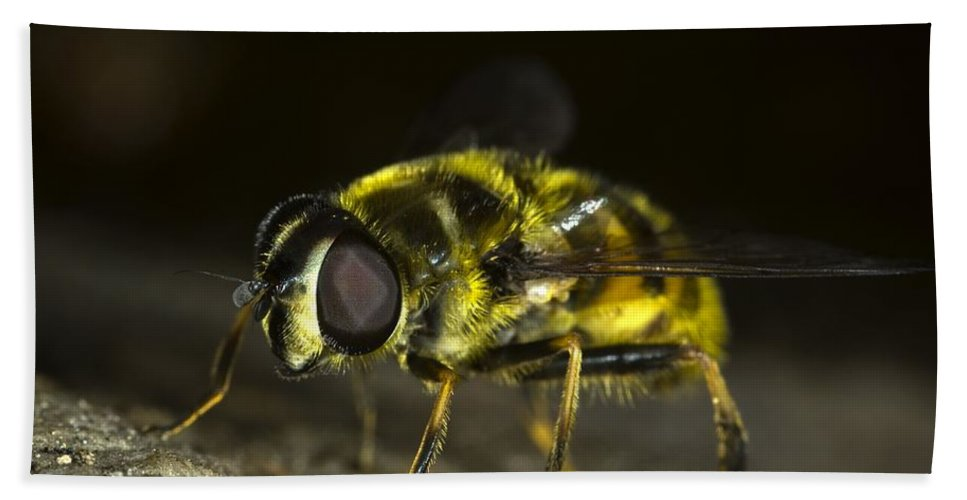Hoverfly Bath Sheet featuring the photograph Hoverfly by FL collection