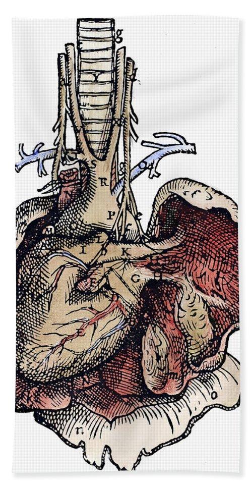 1543 Bath Sheet featuring the photograph Human Heart, 1543 by Granger