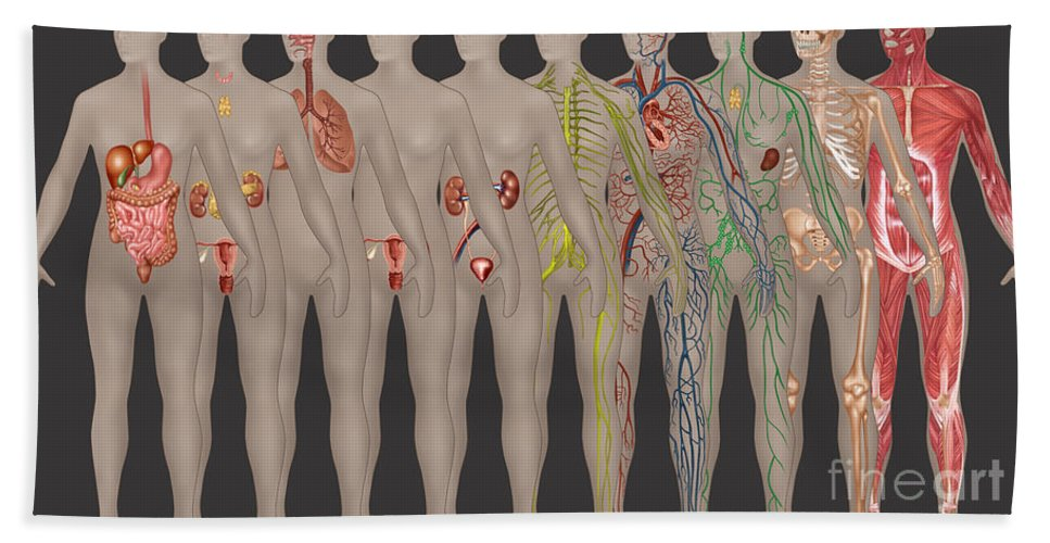 Science Bath Sheet featuring the photograph Human Systems In The Female Anatomy by Gwen Shockey