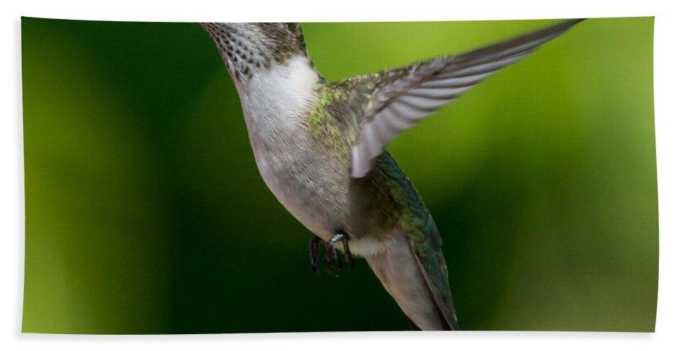 Bird Bath Sheet featuring the photograph Hummer In Flight by Richard Kitchen