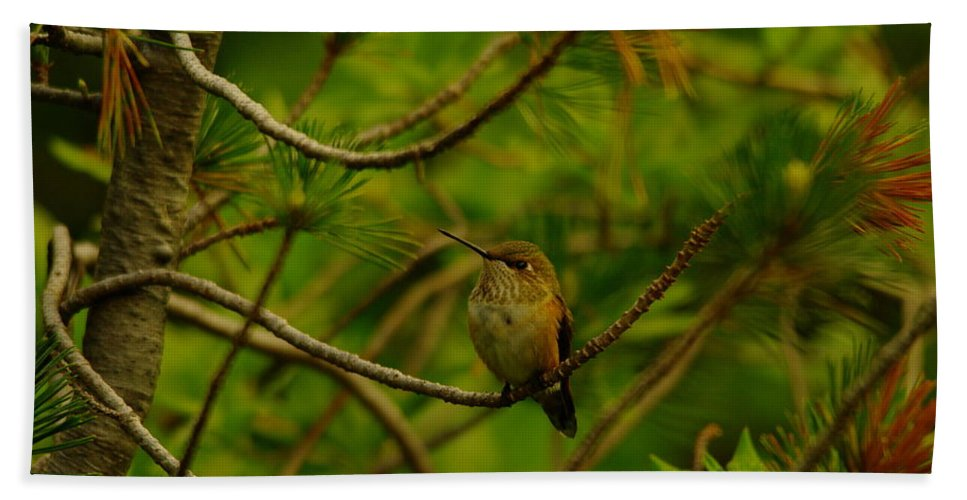 Hummingbirds Bath Sheet featuring the photograph Humming Birds Perched by Jeff Swan