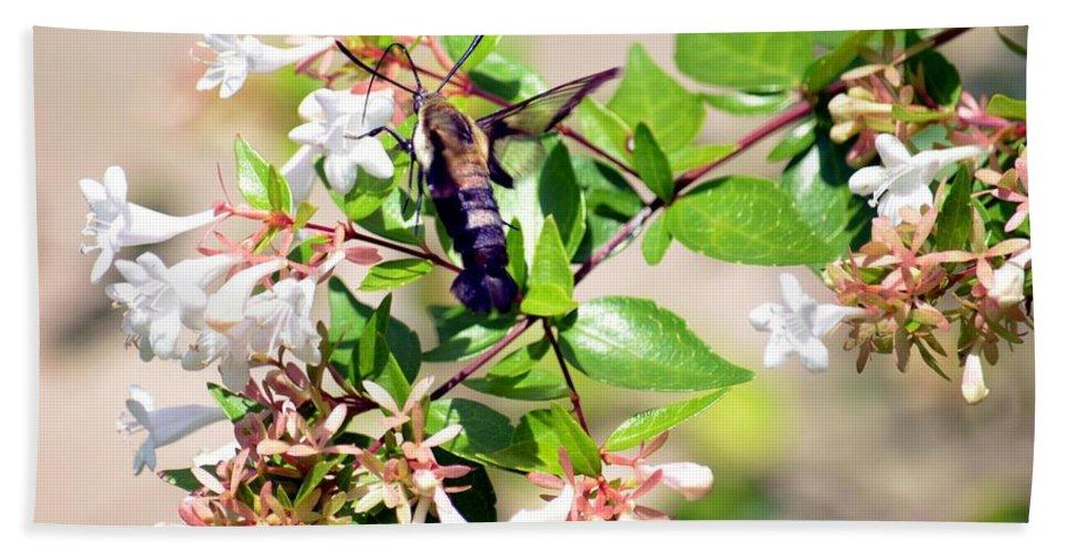 Hummingbird Clearwing Moth Bath Towel featuring the photograph Hummingbird Clearwing Moth by Maria Urso