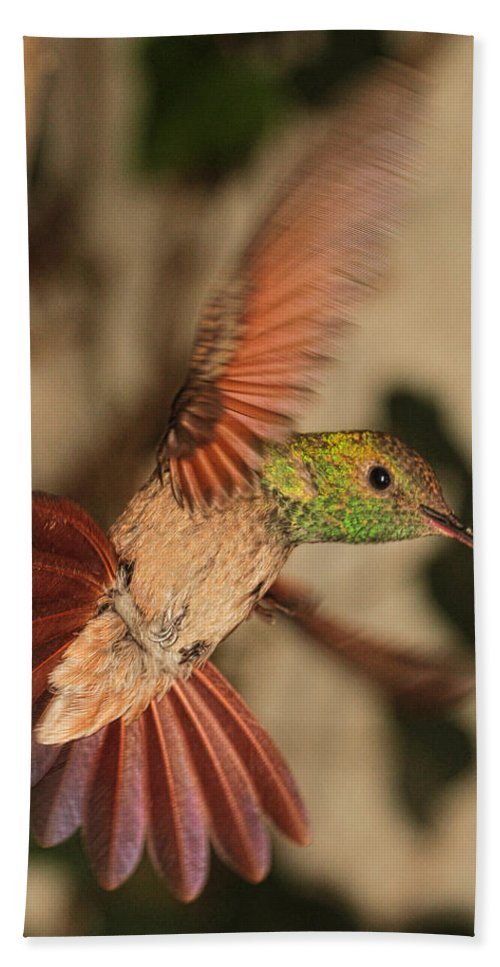 Hummingbird Hand Towel featuring the photograph Hummingbird I by Agustin Uzarraga