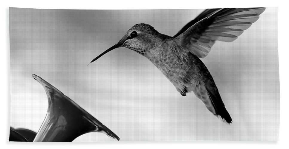 Hummingbird In Black And White Bath Sheet featuring the photograph Hummingbird In Black And White by Carol Groenen