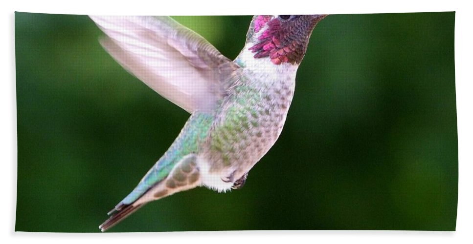 White Bath Sheet featuring the photograph Hummingbird In Flight by Mary Deal