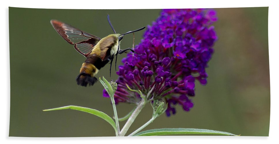 Moth Hand Towel featuring the photograph Hummingbird Moth Iv by Douglas Stucky